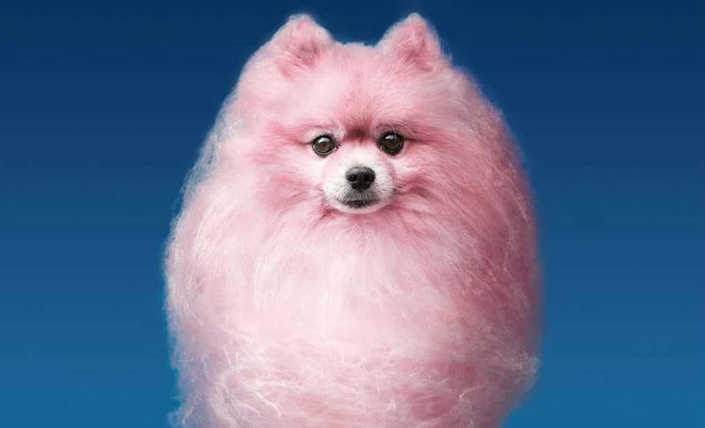 tbt cotton candy dogs for shampoo campaign