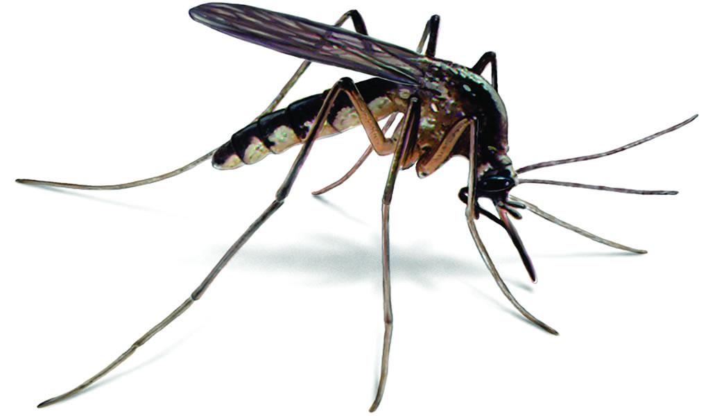 Kill The S Mosquito
